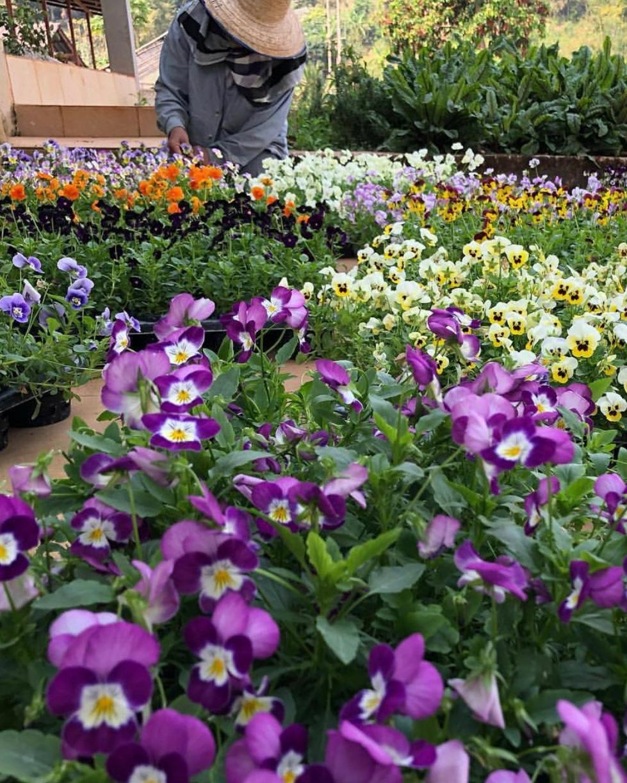 Edible Flower Garden in Chiang Mai, Thailand