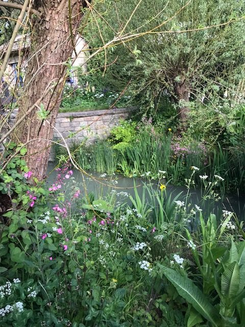 Richard Fenner writes about the sightings at the Chelsea Flower Show