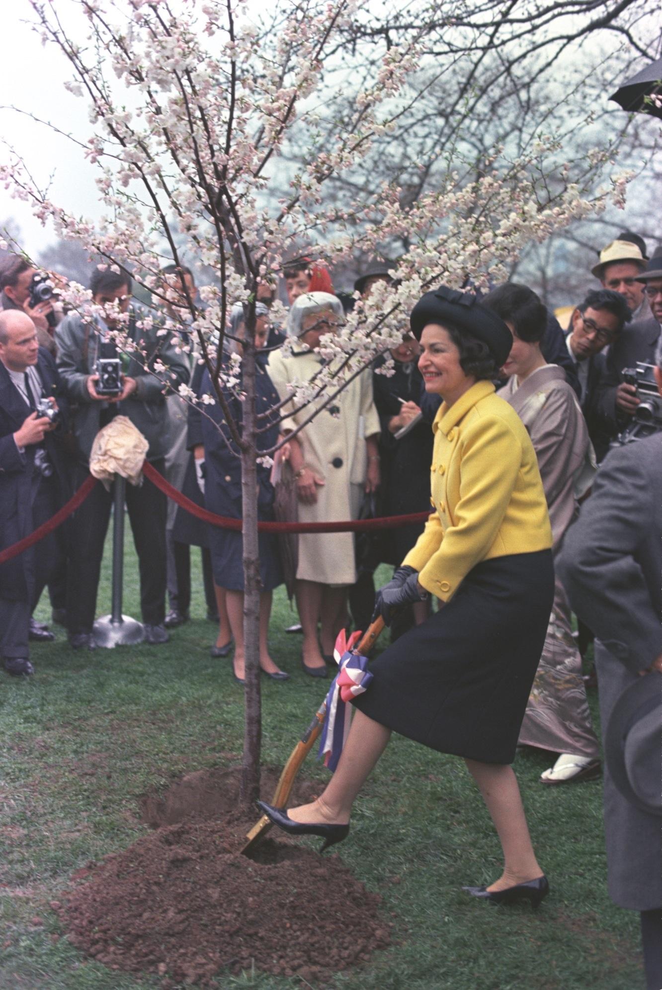 Lady Bird Johnson's Flowerful Legacy by Shannon Joyce